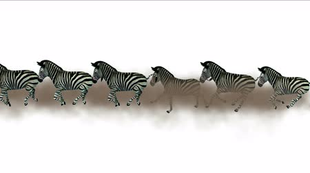 friesian : 4k Group zebras silhouette migration running smoke,Africa grasslands nature background.