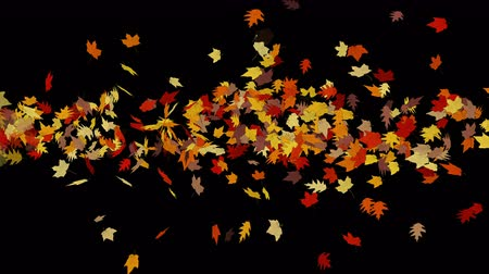 проливая : 4k Maple leafs falling & flare light,Maple leaves autumn fall romantic drift particle artistic.