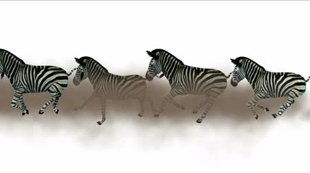 göç : 4k Group zebras horses donkeys animals silhouette migration running smoke,Africa grasslands nature background.