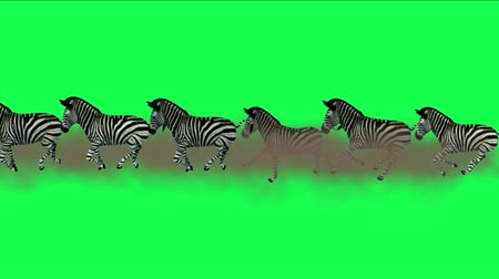 friesian : 4k Group zebras horses donkeys animals silhouette migration running smoke,Africa grasslands nature background.