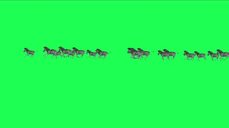 friesian : 4k Group horses donkeys zebras animals silhouette migration running,Africa grasslands nature background. Stock Footage
