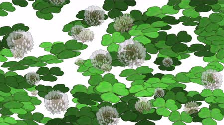 filigrana : 4k Clover dandelion germination lawn grass vegetation plant background.