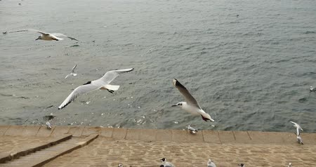szpak : 4k Flock of seagulls fly over ocean and shore in daytime. Wideo