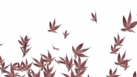 bod vzplanutí : 4k Abstract 3d maple plant leaves autumn tree space particle design romance wind blowing art background.