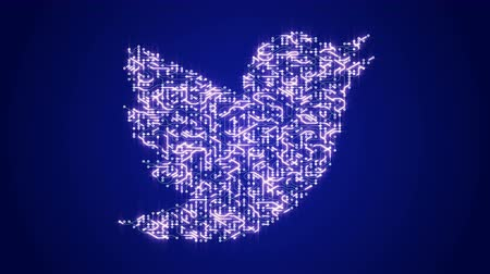 integrator : 4k circuit board electrons shaped twitter logo,electronic connections,Global internet social media,worldwide.