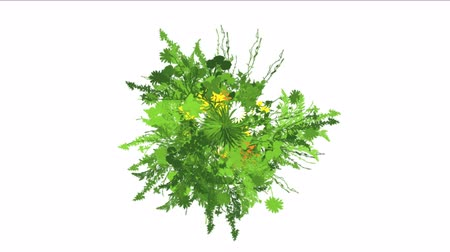 margaréta : 4k lush flower leaves crops shrubs bushes plant grass growing. Stock mozgókép