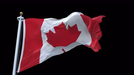 континентальный : 4k looping canada flag with flagpole waving in wind.A fully digital rendering,The animation loops at 20 seconds.flag 3D animation with alpha channel included.