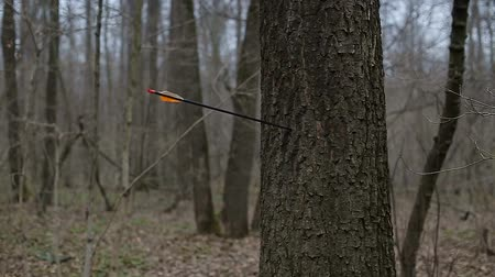 okçuluk : Man firing arrow into tree in forest