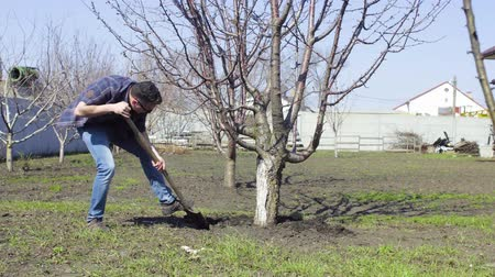 soymak : Man dig a tree in the spring use a shovel