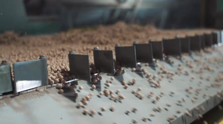 Close-up shot of the process of cleaning the grain at the factory Stock Footage