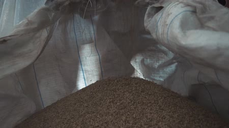 the seeds are poured into a bag on factory for sorting and packaging grains Stock Footage
