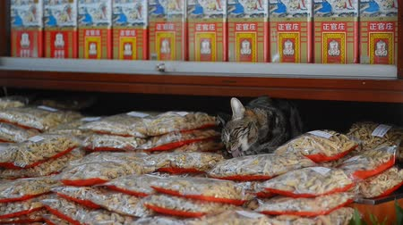 kotki : Hongkong, China - August 2019: Tabby cat licking paws in pet food shop in asian city on summer. Adult lovely animal spending time, sitting at street store with feed packages. Urban market in Hong Kong. Concept: business, feline, traditional.