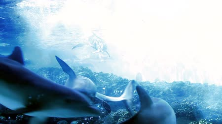mar : dolphins in the ocean