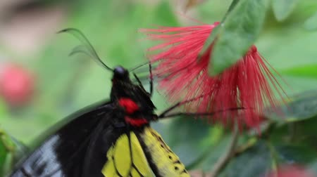 exotic butterfly feeds on flower