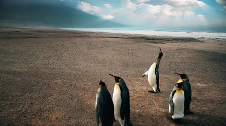 imparator : Slow motion zoom in with five emperor penguins with dramatic skies.