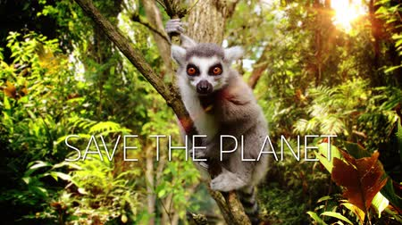 madagaskar : A slow motion video with a Lemur on a tree and save the planet caption.