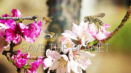 pólen : A slow motion video with bees and flowers and save the planet caption.