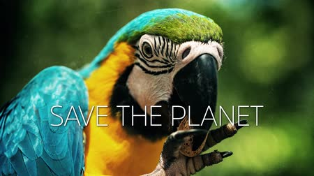 ara : A slow motion video with a blue and yellow macaw parrot and save the planet caption Stock Footage