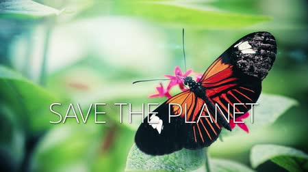 A slow motion video with a butterfly on a flower and save the planet caption