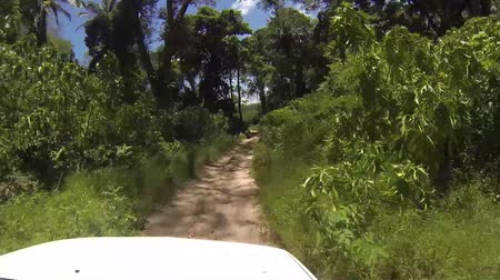 rural brazil : Driving Tropical forest road in dry season Stock Footage