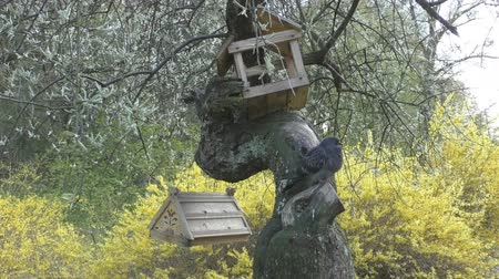 pintos : Homemade birdhouse for birds hanging on tree Stock Footage