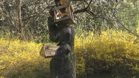 birch : Homemade birdhouse for birds hanging on tree Stock Footage