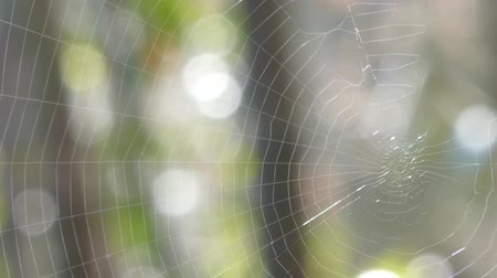 morning : Closeup of spider web in a sunny day of spring with bokeh effect Stock Footage