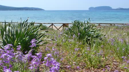 av : View of Capo Caccia from the desert beach of Mugoni in a sunny day Stok Video