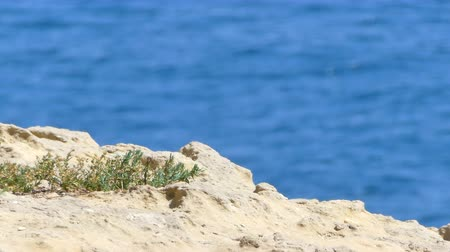 african decent : rock in a sunny day in summer in sardinia Stock Footage