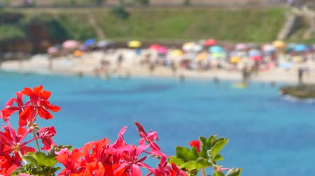 hale : view of crowded Balai beach, in Sardinia, from behind flowers with change focus point Stok Video