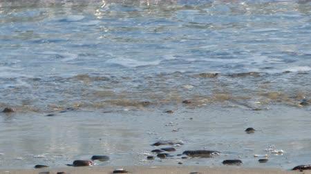 sardinie : crystal clear water on the beach in summer morning