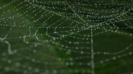 Morning dew on a spider web. animation