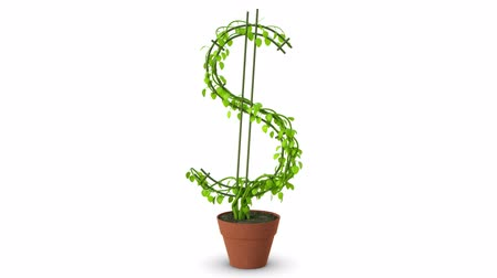 crescimento : Bonsai. Dollar tree. Growth of dollar tree. Isolated. Vídeos
