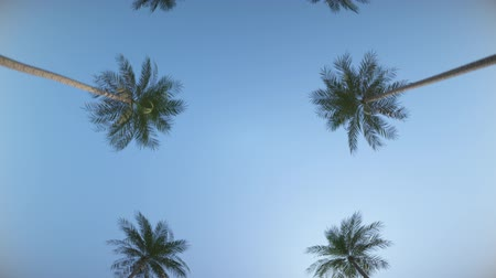 Driving down the street between the tropical palms under the blue summer sky. Loop animation. In Ultra HD 4k.