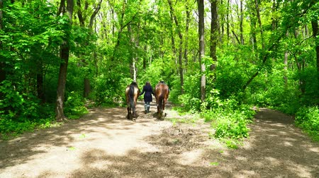 koňmo : Young woman walking with two horses in the green forest during the summer