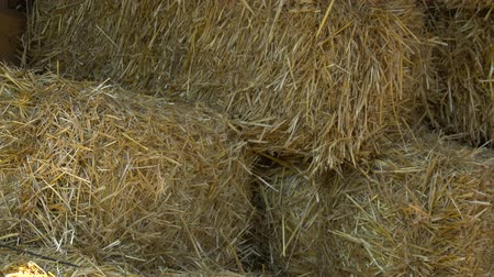 hayloft : Closeup of a hay on the farm
