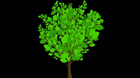 crescimento : Growing Tree Animation Still Leaves. An animated illustrationcartoon of a tree growing and leaves popping up on the branches. The leaves have some texture.  clip comes with animated matte for easy isolation.