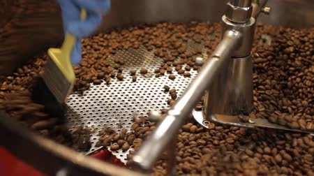 brushing : Coffee Bean Stir Finished. An employee brushes through the roasted beans as the sifter moves. 2 Varied Shots. dolly