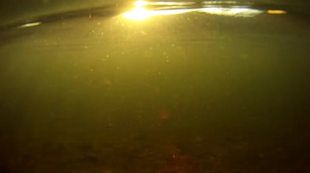 chaluha : Sunrise Underwater. camera sees sunrise before dipping underwater. fish are seen swimming around. Dostupné videozáznamy