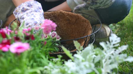 ogrodnik : Place Flower in Hanging Basket. camera dollies right and focus is changed from foreground flowers to background where gardener is placing a flower in the coco liner basket.