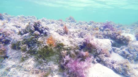 tyrkysový : Lower to Ocean Reef. camera shows ocean reef in shallow water