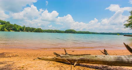 apodrecendo : Beach Time Lapse with Fallen Tree in Foreground. a stripped tree trunk lying on a beach shore during a day time lapse. shot is at Lake Lanier in North Atlanta