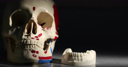esquerda : Skull and Jaw Bone Dental Models. camera moves right then left passing by a skull and two jaw bones, used by dentist to show different techniques of dentistry. Models of bone. Stock Footage