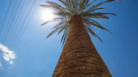 industrialization : Palm Tree Sun Flare and Power Cable Lines. looking up at a single palm tree with electrical lines interfering into the nature scene with sun flare
