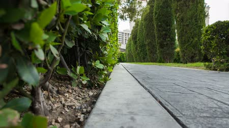 esquerda : Stone Walkway Garden Hedge Reveal Low Angle Move Right. low angle view of a stone footpath in a green garden setting pathway revealed from behind hedges. Move right near hedges Stock Footage