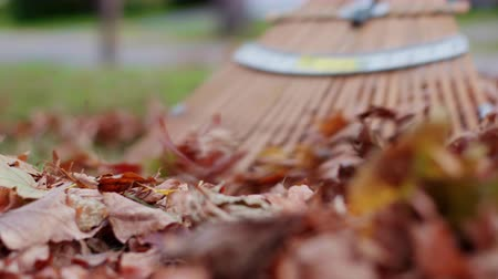 sıkıcı iş : Raking Leaves Low Angle Move Right. a low angle view of a raking up leaves into a pile as the view moves from left to right