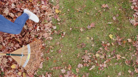rakás : Lady Rakes Leaves Overhead. an overhead looking down view of a woman raking leaves toward left side of screen