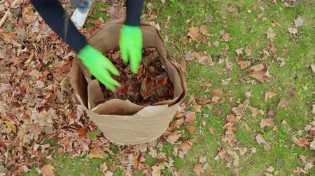 batoh : Rise Up From Inside of Leaf Bag Placing Leaves. overhead view from inside a leaf bag rising up to reveal woman picking up and placing leaves in a bag