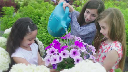Girl Waters Flower While Girls Hold Plant. a slow motion fun shot of one girl pouring water into a flower plant that two other girls are holding and smiling
