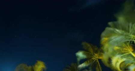 Look Up at Stars with Palm Trees Timelapse. a moving night timelapse looking up at the stars through palm trees and clouds Dostupné videozáznamy